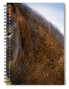 Young Icelandic Horse Spiral Notebook