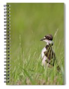 Young Killdeer In Grass Spiral Notebook