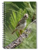 Young Lark Sparrow 3 Spiral Notebook