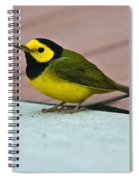 Young Male Hooded Warbler 5 Spiral Notebook