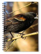 Young Male Red-winged Black Bird Spiral Notebook