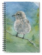 Young Northern Shrike Spiral Notebook