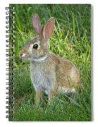 Young Rabbit Spiral Notebook