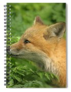 Young Red Fox In Profile Spiral Notebook