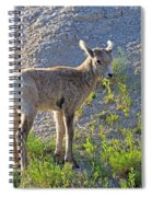 Young Rocky Mountain Bighorn Sheep Spiral Notebook