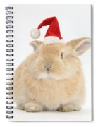Young Sandy Rabbit Wearing A Christmas Spiral Notebook