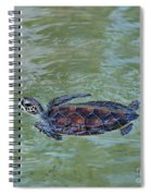 Young Sea Turtle Spiral Notebook