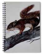 Young Squirrel Spiral Notebook