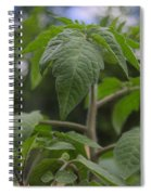 Young Tomato Spiral Notebook