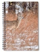 Young White-tailed Deer In The Snow Spiral Notebook