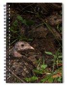 Young Wild Turkeys Spiral Notebook