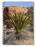 Yucca Four Spiral Notebook