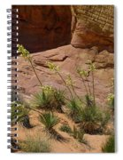 Yucca Plants Valley Of Fire Spiral Notebook