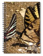 Zebra And Tigers Spiral Notebook
