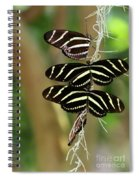 Zebra Butterflies Hanging On Spiral Notebook