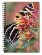 Zebra Butterfly With Blue Eyes Spiral Notebook
