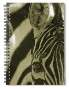 Zebra Close Up A Spiral Notebook