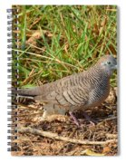 Zebra Dove Spiral Notebook