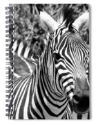 zebra Family Spiral Notebook