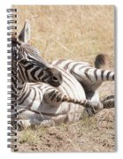 Zebra Foal Rolls In Dust On Savannah Spiral Notebook