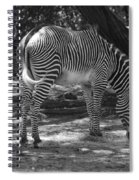 Zebra In Black And White Spiral Notebook