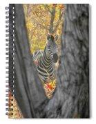 Zebra In Mopane Textures Spiral Notebook