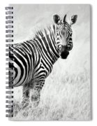 Zebra In The African Savanna Spiral Notebook