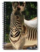 Zebra Portrait Spiral Notebook