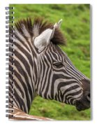 Zebra Portrait Spiral Notebook