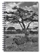 Zebra Running Through Savannah Spiral Notebook