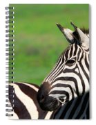 Zebra Spiral Notebook