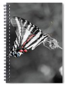 Zebra Swallowtail Butterfly 2016 Spiral Notebook