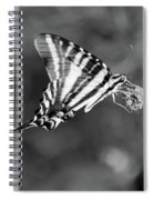 Zebra Swallowtail Butterfly Black And White Spiral Notebook