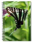 Zebra Swallowtail Butterfly In Green Spiral Notebook