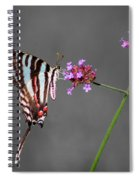 Zebra Swallowtail Butterfly With Verbena Spiral Notebook