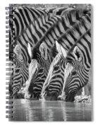 Zebras Drinking Spiral Notebook