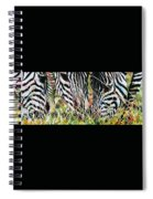 Zebras In The Grass Spiral Notebook