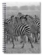 Zebras On The March Spiral Notebook