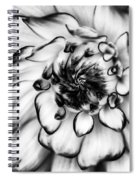 Zinnia Close Up In Black And White Spiral Notebook