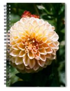 Zinnia  Spiral Notebook