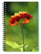 Zinnia Flower Spiral Notebook