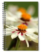 Zinnia Named Zahara Starlight Rose Spiral Notebook