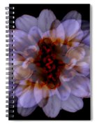Zinnia On Black Spiral Notebook