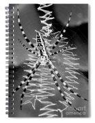 Zipper Spider - Black And White Spiral Notebook
