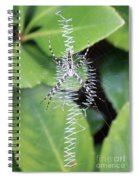 Zipper Spider Spiral Notebook