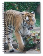 Chicago Zoo Tiger Spiral Notebook