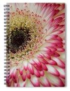 Gerbera Daisy Spiral Notebook