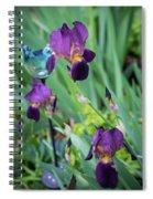 Iris In The Cottage Garden Spiral Notebook