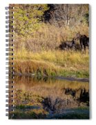 Moose At Green Pond Spiral Notebook