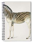 Mountain Zebra  Dauw  Illustrated By Charles Dessalines D' Orbigny  1806-1876  Spiral Notebook